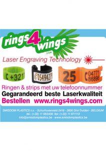 smisdomrings4wings_20130114_advertentie-85x74