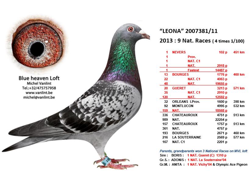 """""""LEONA"""" : B11-2007381"""
